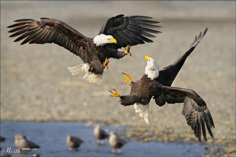Hayvanlar aleminden muhteşem fotoğraflar...