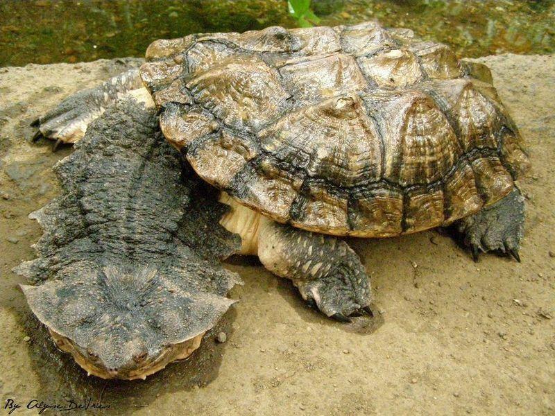 Bu nasıl kaplumbağa!..