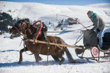 Uludağ'da atların karla imtihanı