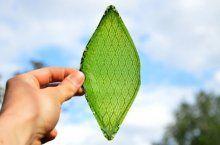 Bu yapay yaprak uzayda nefes almamızı sağlayacak bir oksijen fabrikası