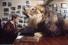 Evlerinde dev bir aslan var