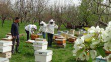 Arıcılardan ilkbahar bakımı