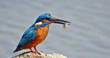 Belgesellerdeki kuş türleri Filyos Vadisi'nde