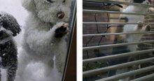 Evlerinin kapısını çalan hayvanlar!