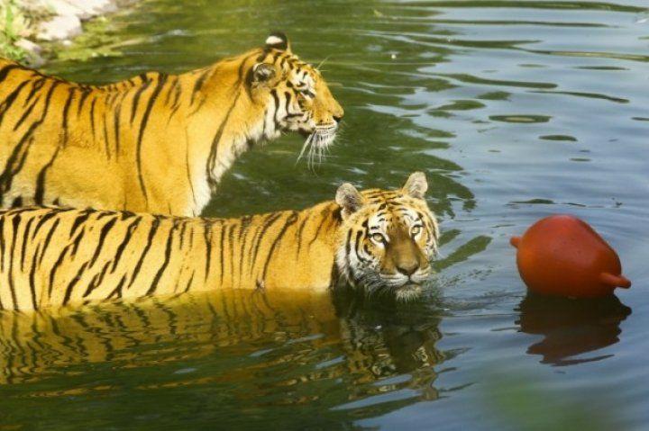 Sıcaktan bunalan hayvanlara yaz menüsü