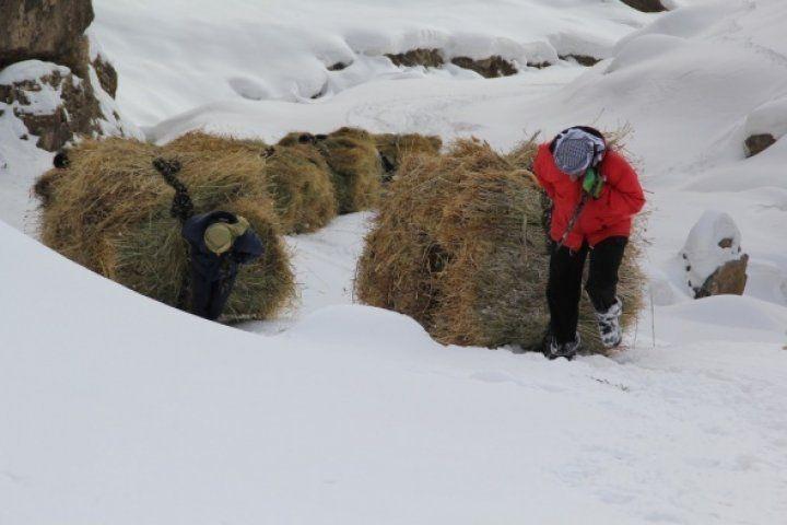 Canları pahasına hayvanlar için dağdan kızaklarla ot taşıyorlar