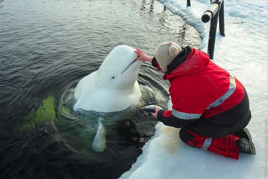 Buza saplanan yunusa balık yardımı