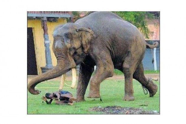 Hayvanların ilginç intikam sahneleri