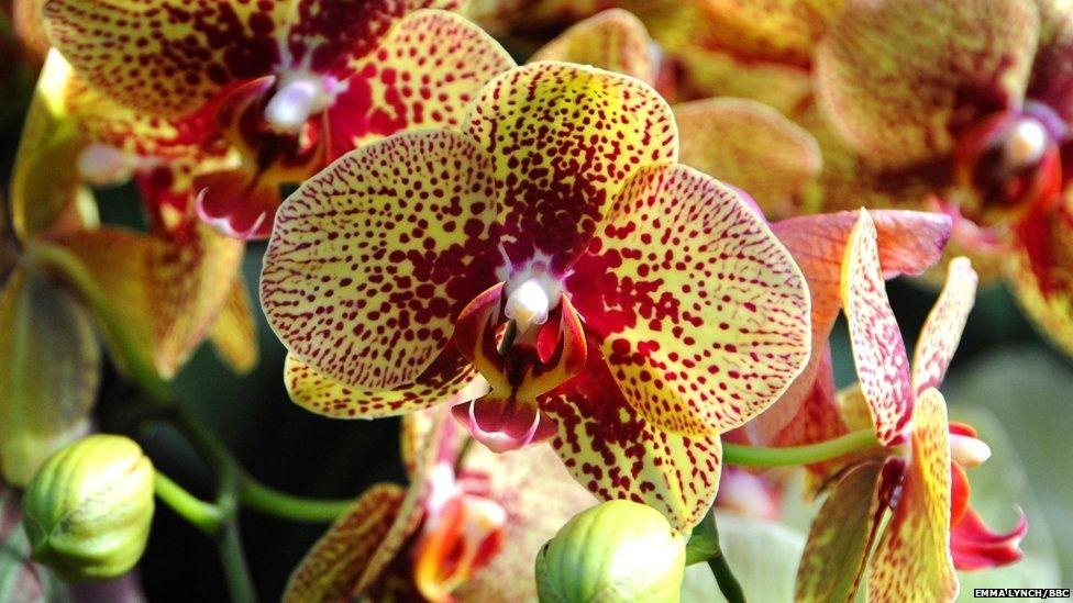 Rengarenk orkideler...