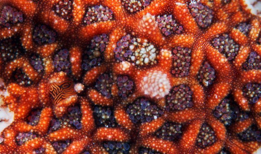 Fotoğraflarla rengarenk deniz yıldızları...