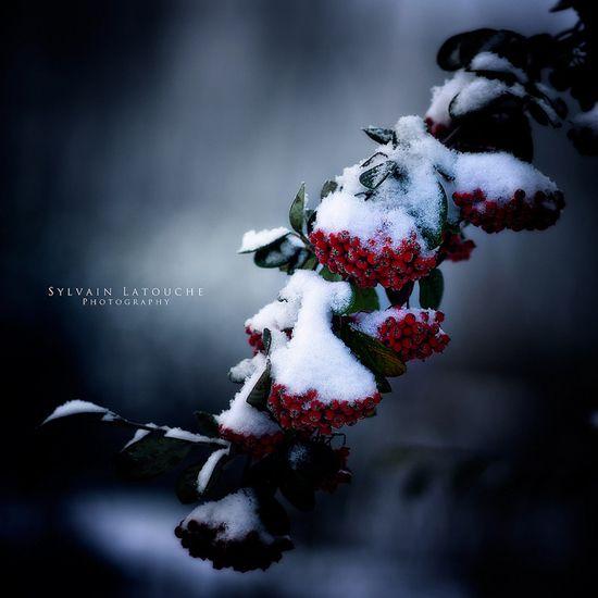 Beyaz güzelliğin muhteşem kareleri