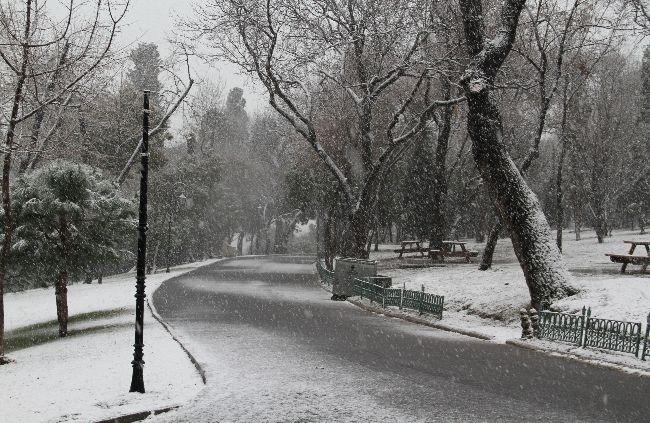 Yıldız Parkı'nda sincapların karla dansı!