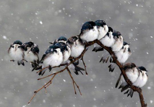 2012'nin En iyi doğa fotoğrafları