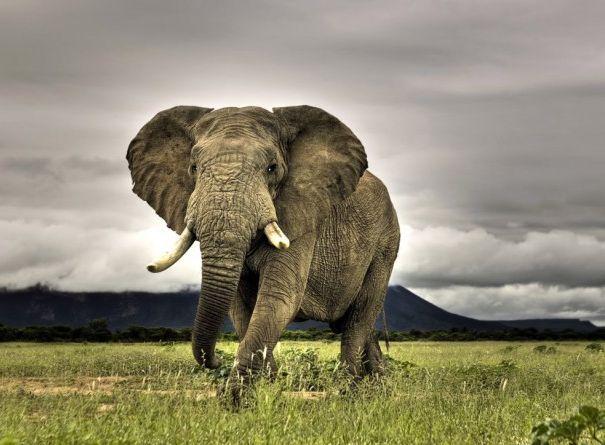 Dünyanın en büyük hayvanları