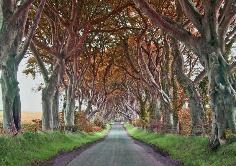 Muhteşem ağaç tüneller görenleri hayran bırakıyor