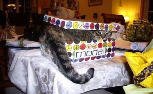 Dikkat kedi var!