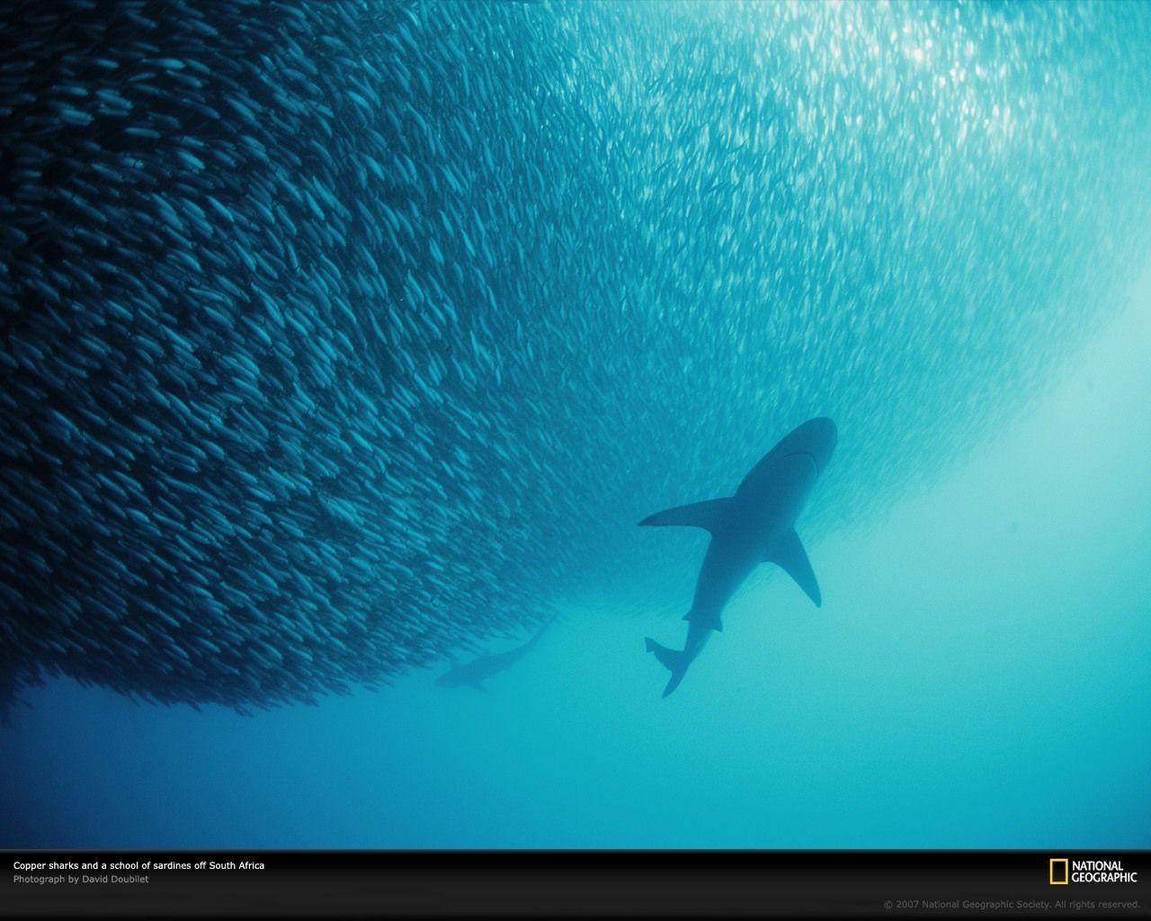 Denizin derinliklerinde büyük av!