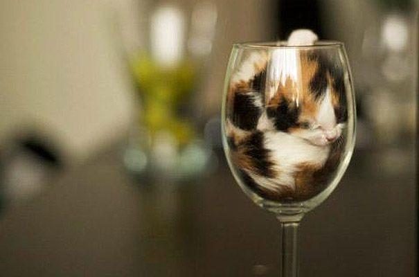 Kedilerin uyku sanatı