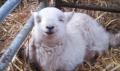 Mutlu oldukları yüzlerinden okunan hayvanlar