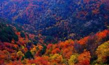 Sonbahar mevsiminin tüm güzellikleri