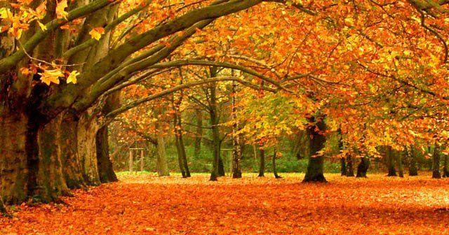 Beslenme alışkanlıkları, ruh ve beden sağlığı sonbaharda değişiyor