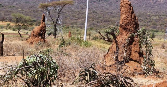 Etiyopya'da büyüleyen karınca gökdelenleri