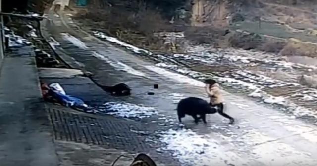 Yaban domuzu dehşet saçtı: 1 ölü, 1 yaralı