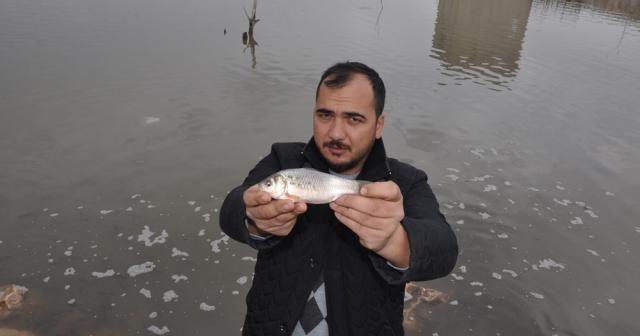 Balıklar karaya vurdu