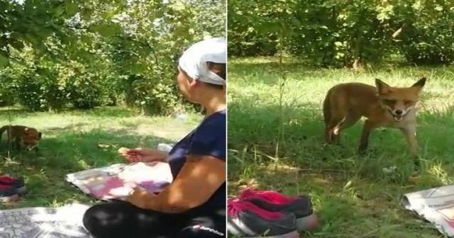 Bahçede karşılaştığı tilkiyle sohbet etti