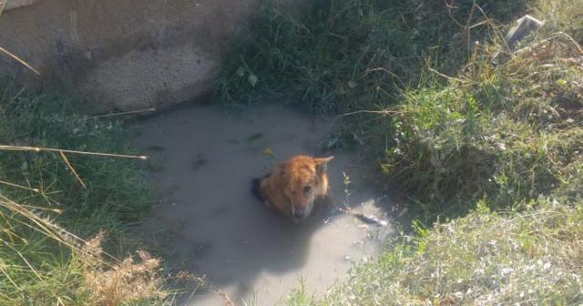 Balçığa saplanan köpeği itfaiye kurtardı