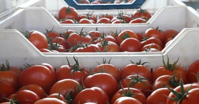 Tanzim satışları sonrası sebze fiyatlarında düşüş