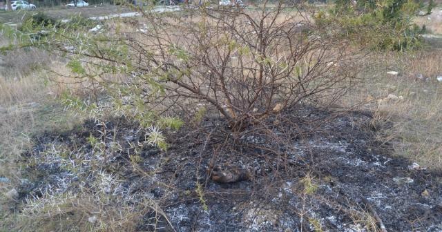 Yavru köpeği diri diri yaktılar