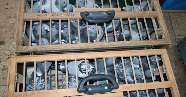 Posta güvercinleri yarışacak