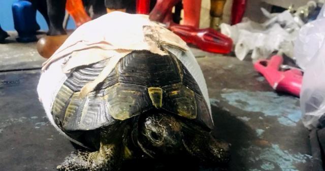 Kaplumbağayı kaportacıda hayata döndürdüler
