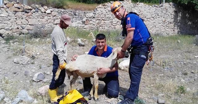 Kuyuya düşen koyunu AFAD ekipleri kurtardı