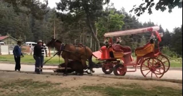 Faytona bağlı bir at sıcak ve yorgunluktan bayıldı
