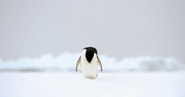 Antarktika'da sıcaklık 20.7 dereceye yükselerek rekor kırdı