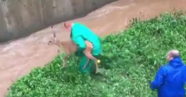 Şiddetli yağışta su kanalına düşen karacayı ekipler kurtardı