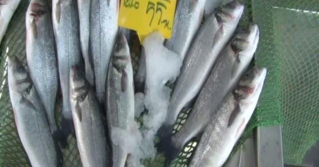 """Balık satıcıları odası yönetim kurulu üyesi Balcı: """" Her balıktan balıkçının yüzü güldü"""""""