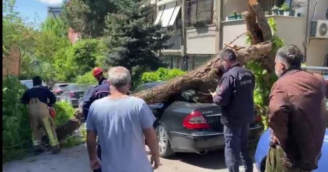 Kadıköy'de otomobillerin üzerine ağaç devrildi