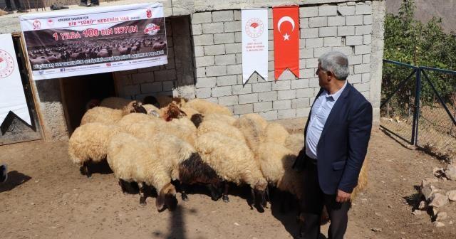 Siirt'te çiftçilere koyun dağıtıldı
