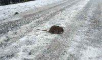 Kar fareyi bile dondurdu