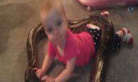 Küçük kızın pitonla oyunu