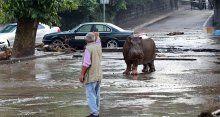 Sel basan şehri vahşi hayvanlar istila etti