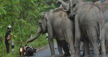 Az kalsın fillerin gazabına uğruyordu