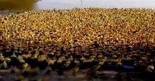 Tam 5 bin ördek yavrusu ilk kez suyla tanıştı