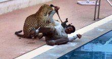 Leopar okula girdi! 6 yaralı