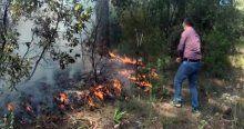 MUSKİ ekiplerinden orman yangınına ilk müdahale