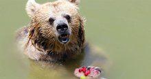 Hayvanların 44 derecede dondurma keyfi