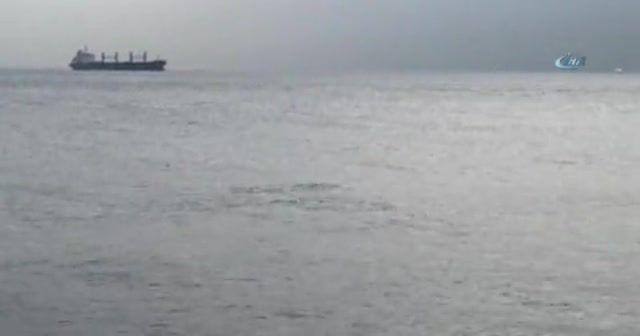 Yunuslar İstanbul Boğaz'ında görsel şölen sundu